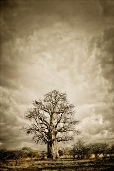 20120525103103-baobab_hierachy_2_klaus_tiedge_whiteframe_02