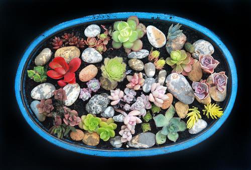 20120526153933-rocks_succulents_m_0435