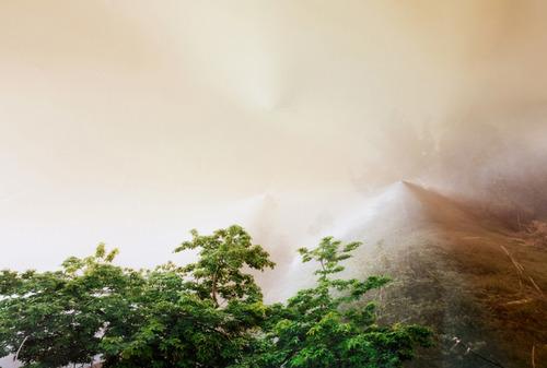 20120530225018-treesandfog