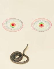 20120531192731-paciulli_snake_eyes