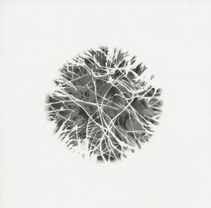 20120607183332-specimen_1
