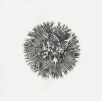 20120607183522-specimen_3