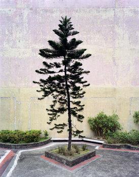 20120609122238-treeververs001