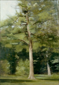 20120620173816-big_pine