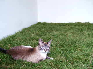 20120622180801-2005-_for_the_cats