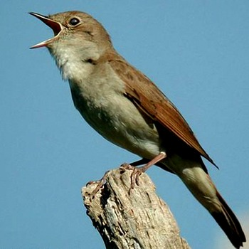 20120624005603-rhq2012_nightingale