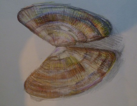 20120630001146-1986_mussel_shell
