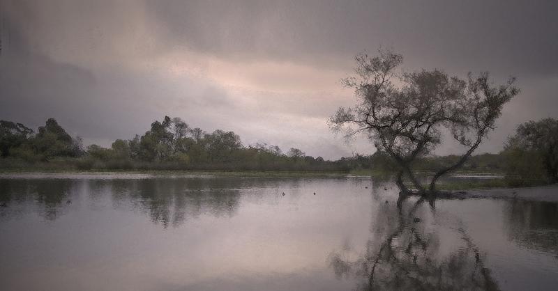 20120701030206-dawn__harbor_lake_veits