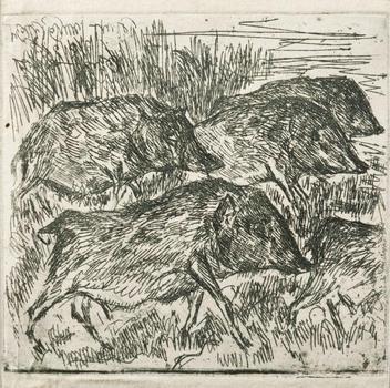 20120703080124-boars