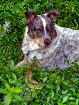20120705064538-buster_in_meadow
