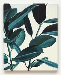 20120707072644-rubber-plant-osboo-3-300