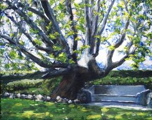 20120713052054-adamson_home_tree