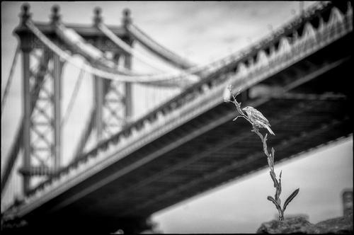 20120717155354-ben_russell_-_manhattan_bridge