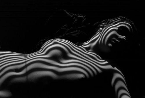 20120719184055-zebra_nude_and_head
