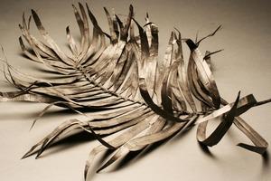 20120719222325-plantstudies20