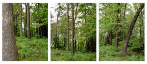 20120719225609-drfa_ahedison_elements_buckhead_triptych_web