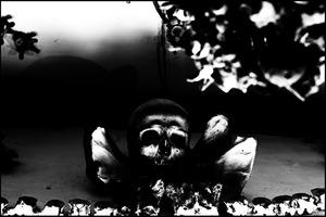 20120721220824-capuchin001