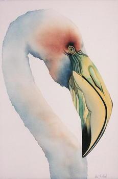 20120726165446-galapagos_flamingo