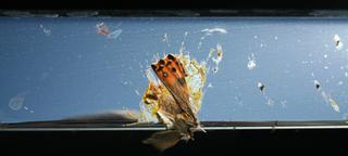 Bugs__dead