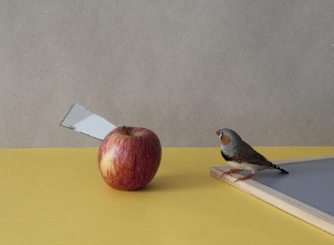 20120728150541-bird_with_apple
