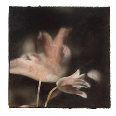 20120802145814-tulips_5_drucker-1