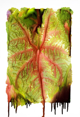 20120812022231-slurry_white_caladium_mg_9868