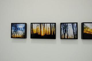 20120816203438-tree_4