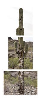 20120817141626-cactus_susandooley