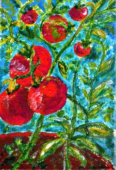 20120822155325-tomato_plantlr