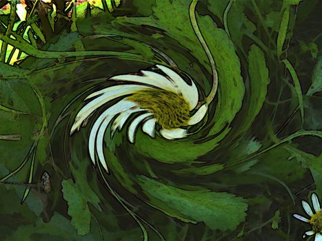 20120823161839-daisy_swirl