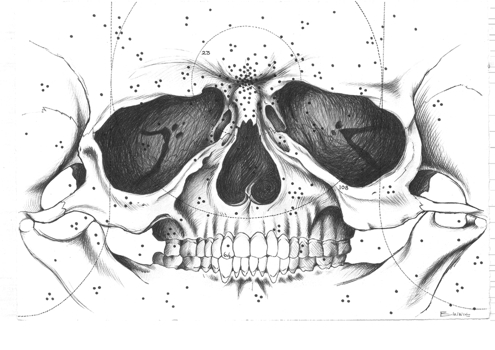 _skull__by_alex_binnie5meg