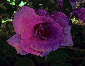 20120823224648-mystic_rose