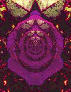 20120824022318-rose_reflecting