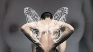 20120826105840-moth_video-4-300x168