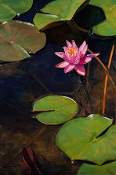 20120828031932-03_water_lilies_xx