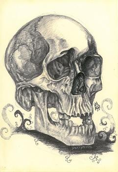 20150216143456-skull_study