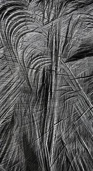 20130314054035-deforestation_n_12____ney_mil__perdomo