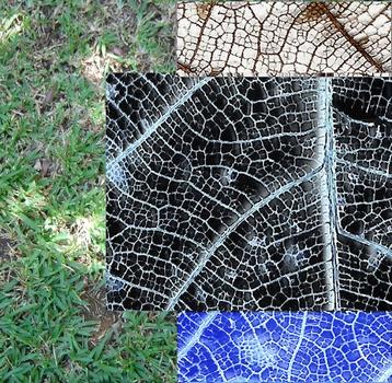 20120914135744-espace__jardin