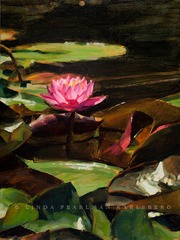 20120922031536-water_lilies_xvii