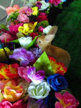 20120924145002-rabbit