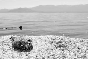 20120924195324-salton_sea_7