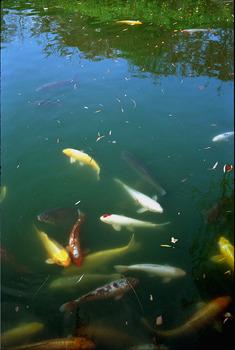 20120928112936-khengliwee_moat
