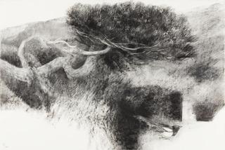 20120929195219-tree-magpie