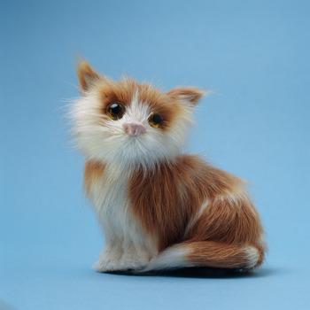20121003233325-cat8