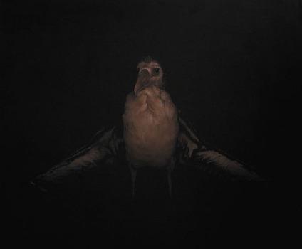 20121004234049-albatross