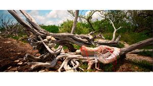 20121005042054-tree_nbc