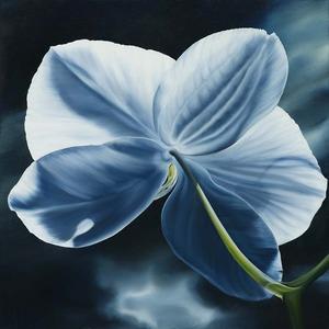 20121008183650-when_flowers_turn_their_backs_ii