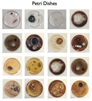 20121010173410-petri_dish_group
