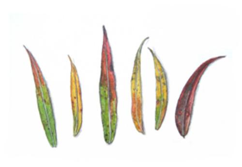 20121011004557-fireweed
