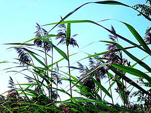 20121014191502-hay_in_the_summer
